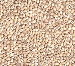 Pearl-Barley